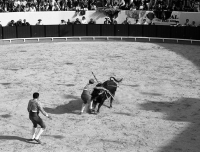 1993 - Viseu Bullfight
