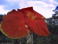 RWGuadeloupe2001-076