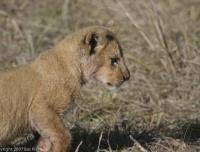 Kenya_0212