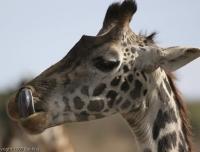 Kenya_0450