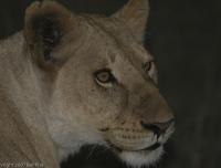Kenya_0615