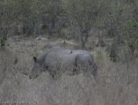 Kenya_0838