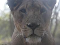 2006 - Kenya