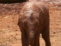 Kenya_3550