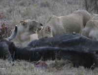 Kenya_0139