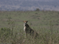 Kenya_0334