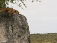 Tanzania_2232