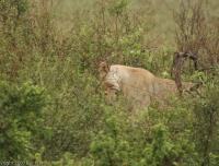 Tanzania_2615