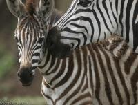 Tanzania_1408