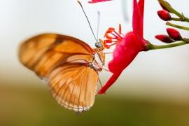 Butterflies in Benalmadena
