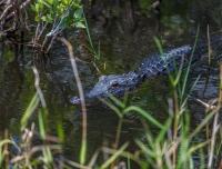 2014 - Florida -0847.jpg