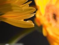 FlowerDropsSept2009-002