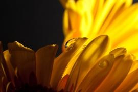 FlowerDropsSept2009-003-bewerkt