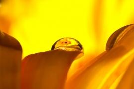 FlowerDropsSept2009-019