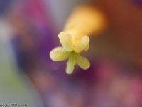 2006-12_FlowersCloseUp_002