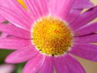 flowers-jun09-004