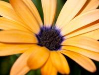 flowers-jun09-001
