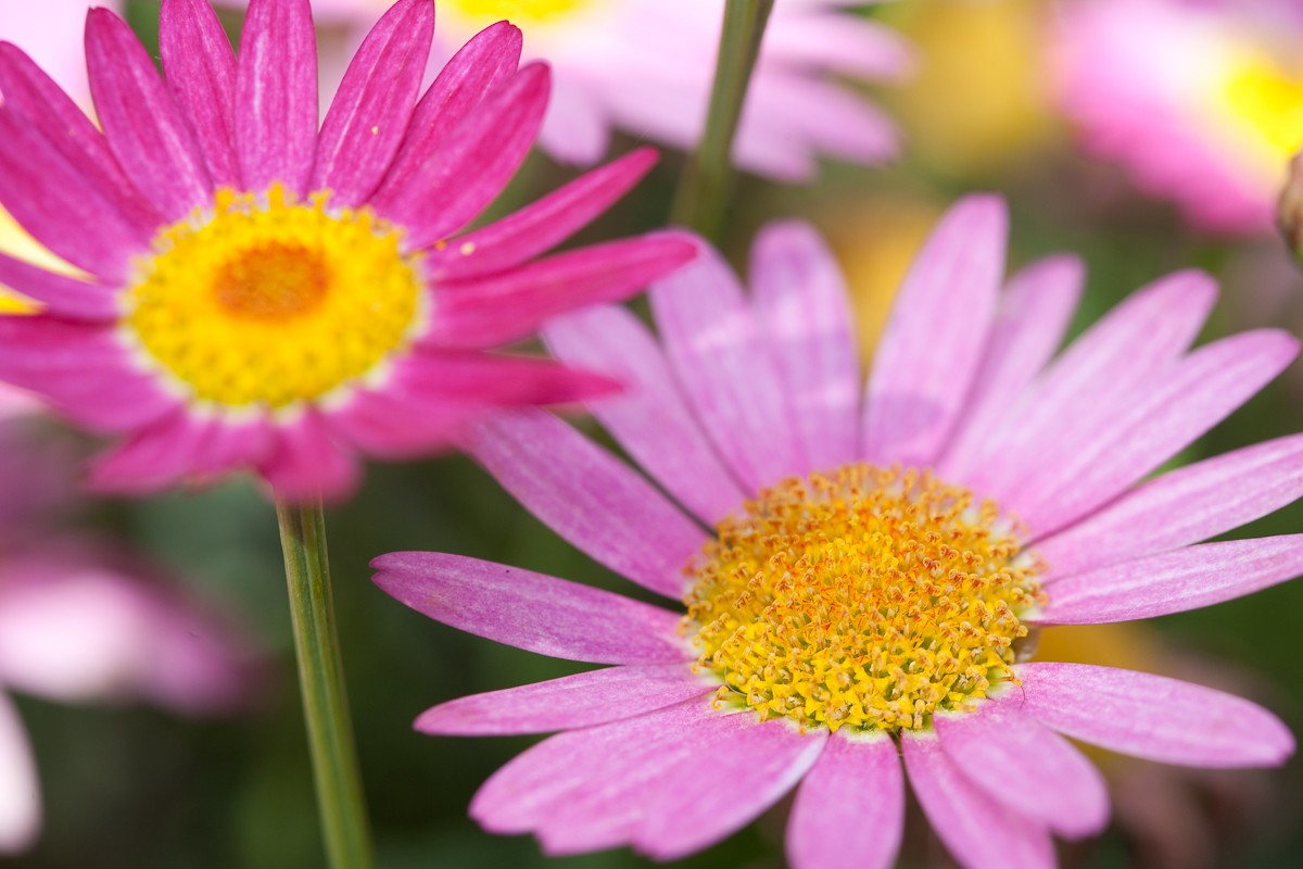 Flowers June 2009