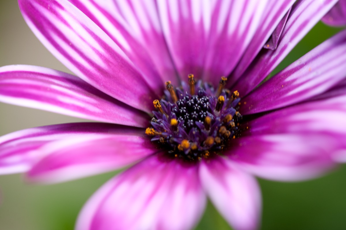 Flowers June Biography