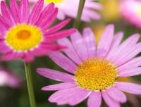 flowers-jun09-002