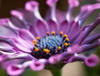 Flowersapril2010-012