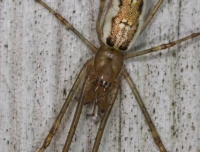 2007-04_spider_003