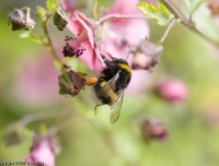 2007-05_bees_003