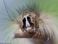 2007-06_caterpillar_004