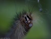 2007-06_caterpillar_001
