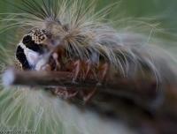 2007-06_caterpillar_002