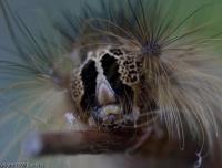2007-06_caterpillar_003