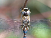 Dragonfly 2010