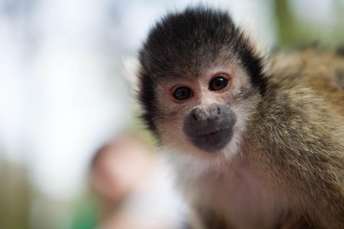 Apenheul monkey photos