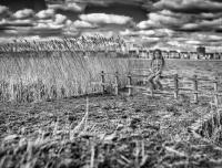 Untitled_Panorama2-Edit-Edit.jpg