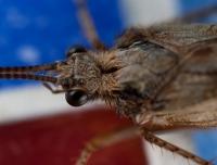 moth-jun09-001