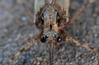 moth-jun09-003