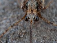 moth-jun09-004