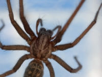 spiderattack-jun09-006